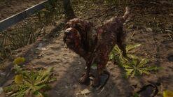 Räudiger Bluthund