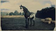 Mustang Black Tovero 2