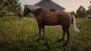 Kentucky Saddler4