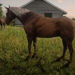 Kentucky Saddler4.jpg