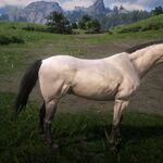 Kentucky Saddler (Buttermilk Buckskin).jpg