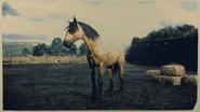 Mustang Buckskin 2