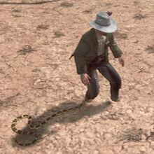 Rattlesnake-nipping-at-heels.jpg