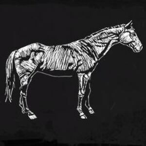 Kentucky Saddler Profil 2.jpg