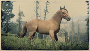 Suffolk Punch Heller Rotfuchs 1