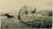 Mustang Chestnut Tovero 1