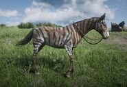 Er ist natürlich Brite Zebra