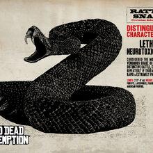 Rattlesnake1.jpg
