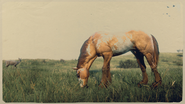 Mustang Red Dun Overo 1