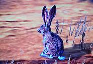 Kaninchen1
