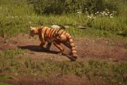 TigerRDRII