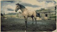 American Standardbred Buckskin 2