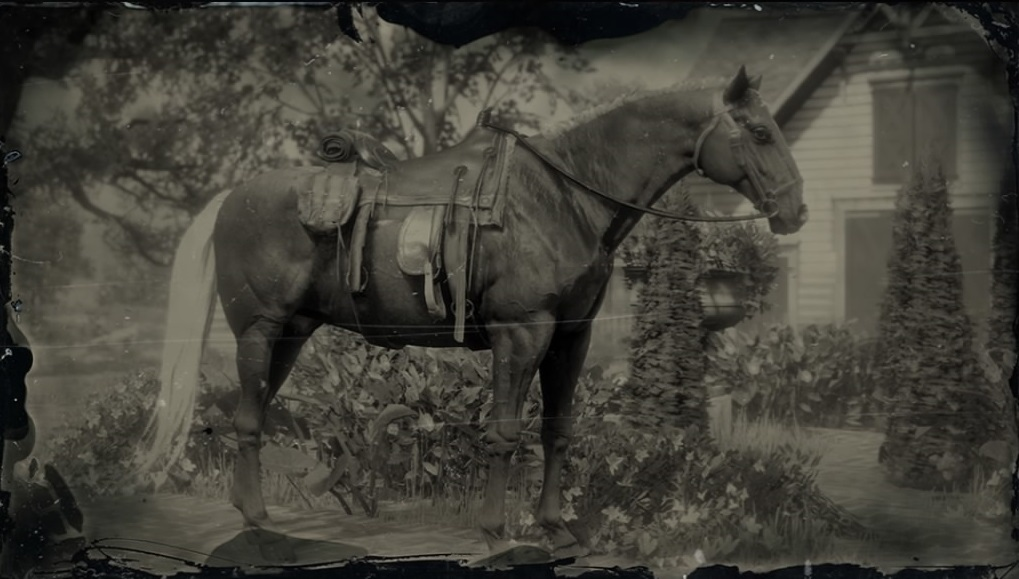 Kentucky Saddler (RDR2)