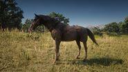 Kentucky Saddler Rappe Bild 2