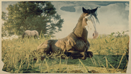 Missouri Foxtrotter Buckskin Brindle 1