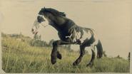 Mustang Black Tovero 1