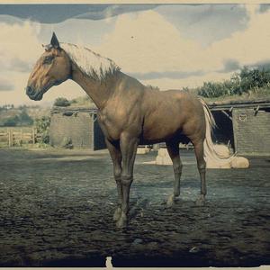 Kentucky Saddler Windfarbener Brauner 2.png
