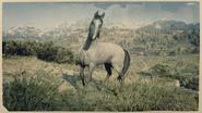 Kentucky Saddler Schimmel 1