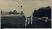 Mustang Chestnut Tovero 2