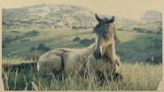 Mustang Buckskin 1