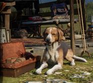 American Foxhound (Hauptbildschirm)