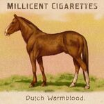 Zigarettenkarten Pferde Dutch Warmblood.jpg
