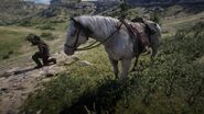 RDR2 American Paint Tobiano Hell