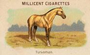 Horses Card Turkoman
