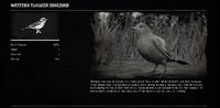 SongbirdProfileRDR2
