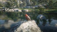 Scarlet Tanager Songbird at O'Creagh's Run