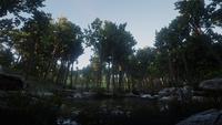 Ringneck Creek fishing spot