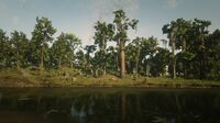 Kamassa River hideout in Red Dead Online seen from the west