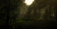 Jungles in Guarma 11