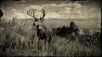 Whitetail Buck loading screen