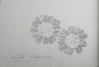 Wild Feverfew drawing by Arthur