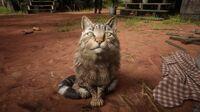 Cat in Rhodes