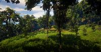 Jungles in Guarma 5