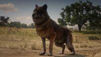 Legendary Emerald Wolf-0