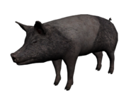 Cerdo2