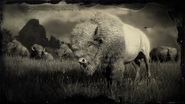 Bison loading screen