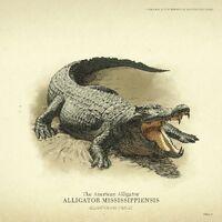 Alligator - Red Dead Redemption 2