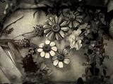 American Wild Flowers