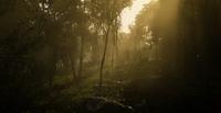Jungles in Guarma