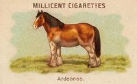 Horses Card Ardennes
