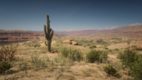 Cholla Springs cactus from loading screen
