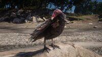 Eastern Turkey Vulture in Dewberry Creek