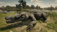 Alligator in Bayou Nwa