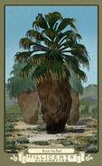 Desert Fan Palm RDR2 CigaretteCards