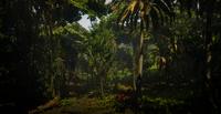 Jungles in Guarma 12