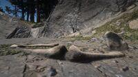 Grizzlies Dakota River Ledge Bone Location